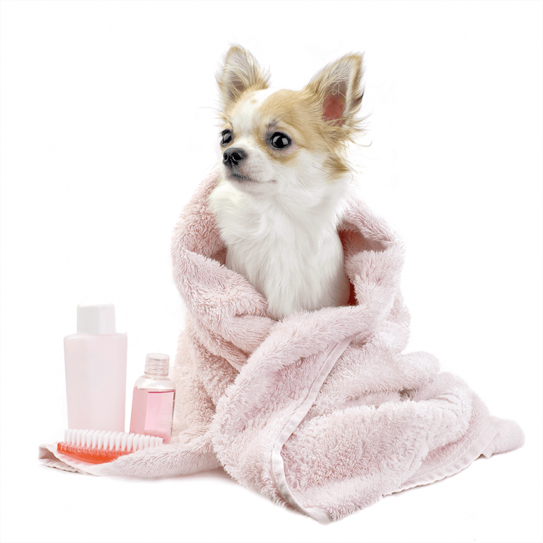 Dog Wrapped In Towel