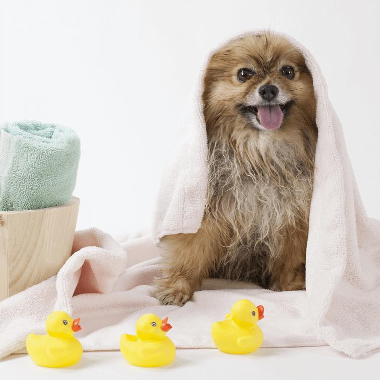 Dog In Towel After Bath
